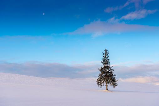 Single Tree「Christmas tree from Biei,Hokkaido」:スマホ壁紙(15)