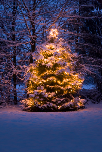 Winter Solstice「Christmas Tree with lights in the Snow」:スマホ壁紙(10)