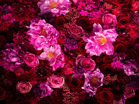 Blossom「Red and pink cut flowers, close up」:スマホ壁紙(8)