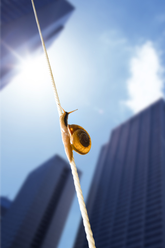 snails「image of snail」:スマホ壁紙(18)