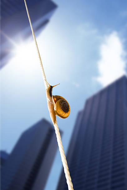 image of snail:スマホ壁紙(壁紙.com)