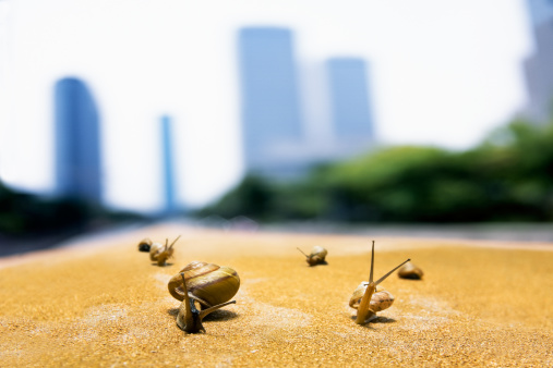 カタツムリ「Image of snails」:スマホ壁紙(16)