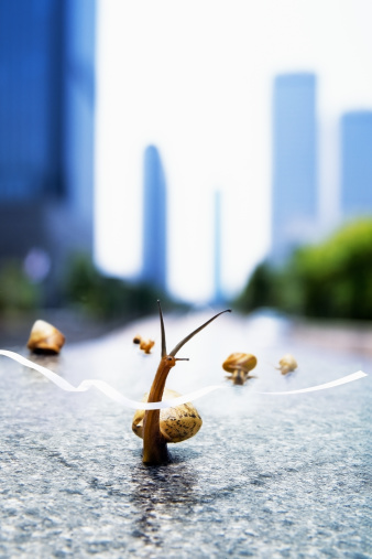 カタツムリ「Image of snail」:スマホ壁紙(2)