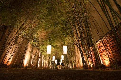 Chinese Lantern「Lantern lit Bamboo path」:スマホ壁紙(3)