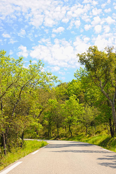 Single Lane Country Road in France Woodland under Summer Sky:スマホ壁紙(壁紙.com)