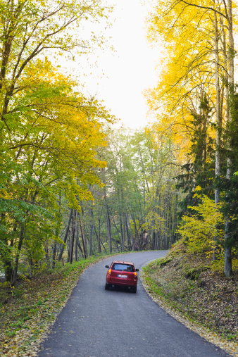 Country Road「Car on road covered in autumn forest」:スマホ壁紙(18)