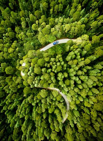 Dirt Road「Car on road through a pine forest」:スマホ壁紙(13)
