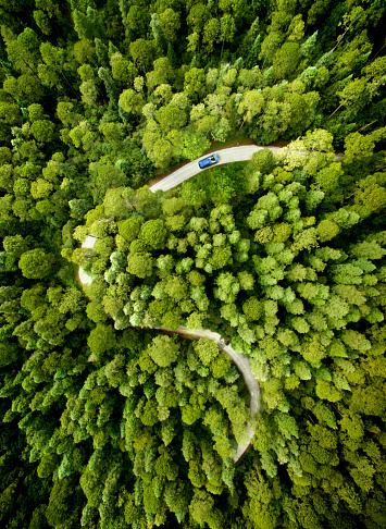National Park「Car on road through a pine forest」:スマホ壁紙(8)
