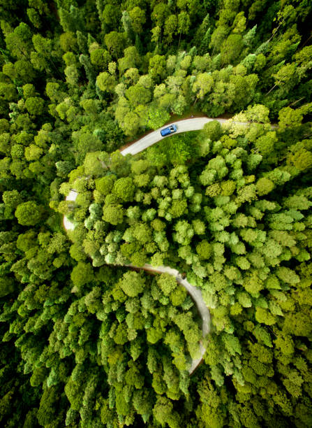Car on road through a pine forest:スマホ壁紙(壁紙.com)