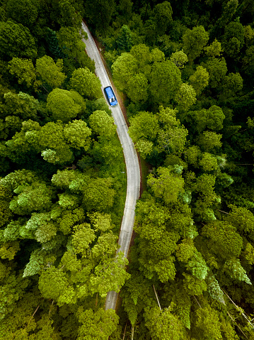 National Park「Car on road through a pine forest」:スマホ壁紙(16)