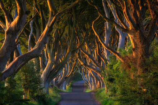 Avenue「Northern Ireland, near Ballymoney, alley and beeches, known as Dark Hedges」:スマホ壁紙(0)