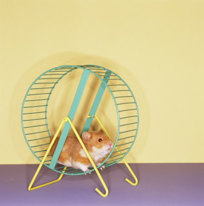 Spinning「Hamster getting workout on spinning wheel」:スマホ壁紙(12)
