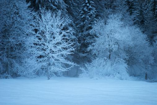Frost「Winter Evening with Snow」:スマホ壁紙(5)