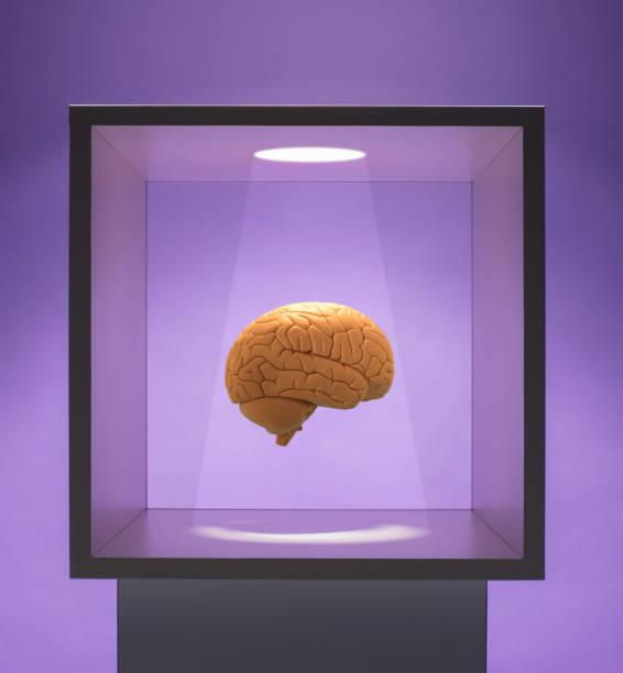 Spot lit Human brain in box:スマホ壁紙(壁紙.com)