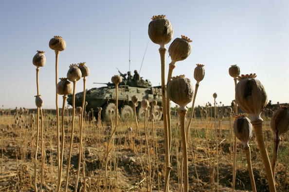 Sweeping「Coalition and Afghan Forces Launch Offensive Against Taliban」:写真・画像(17)[壁紙.com]