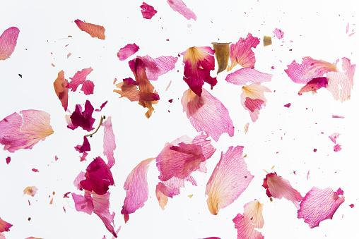 Flower Part「Broken pink petals」:スマホ壁紙(14)