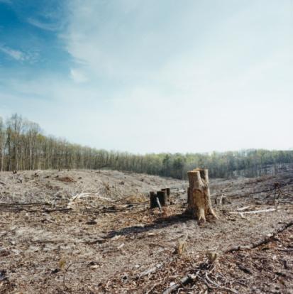 Tree Stump「Deforestation」:スマホ壁紙(16)