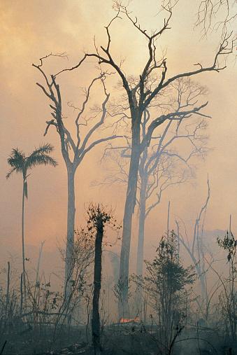 Amazon Rainforest「Deforestation,Amazon」:スマホ壁紙(12)