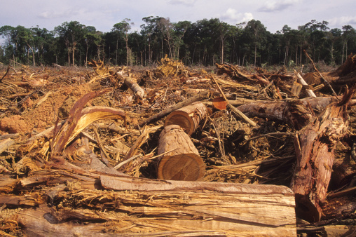 Amazon Rainforest「Deforestation」:スマホ壁紙(18)