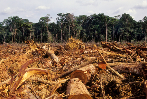 Amazon Rainforest「Deforestation」:スマホ壁紙(2)