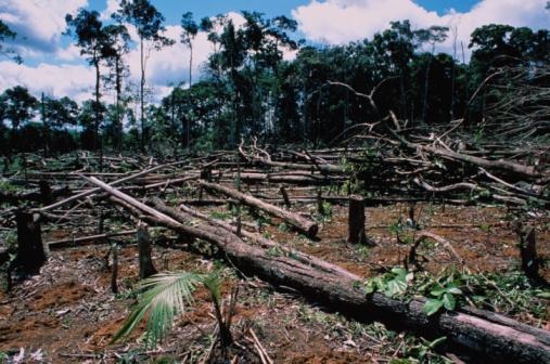 Deforestation「Deforestation」:スマホ壁紙(6)