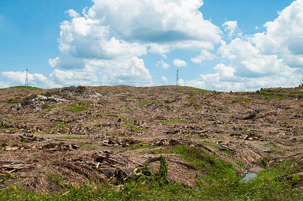 Deforestation in oil palm plantation, cut down for replanting, between Sandakan and Lahad Datu.:スマホ壁紙(壁紙.com)