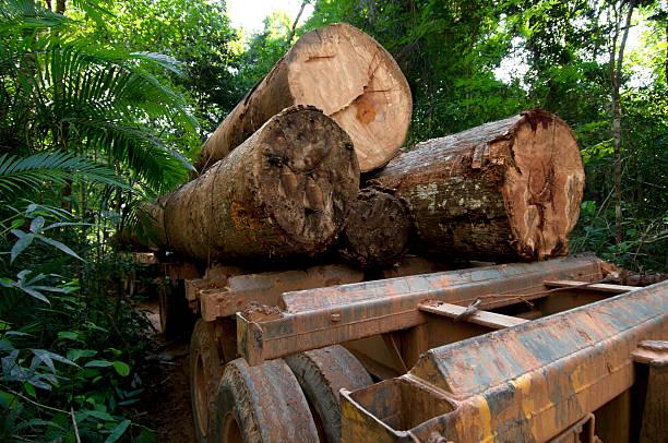 Deforestation in the  amazon rainforest:スマホ壁紙(壁紙.com)