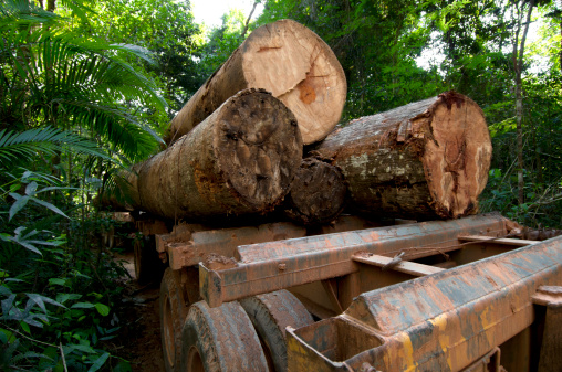 Lumber Industry「Deforestation in the  amazon rainforest」:スマホ壁紙(15)
