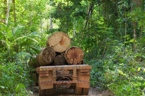 Lumber Industry「Deforestation in the  amazon rainforest」:スマホ壁紙(0)