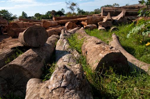 Amazon Rainforest「Deforestation in the amazon rainforest」:スマホ壁紙(12)