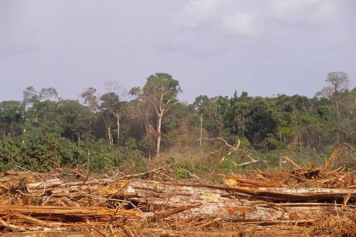 Amazon Rainforest「Deforestation in the Amazon」:スマホ壁紙(4)