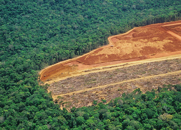 Deforestation in the Amazon:スマホ壁紙(壁紙.com)