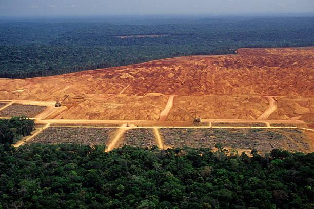 Deforestation in the Amazon:スマホ壁紙(壁紙.com)