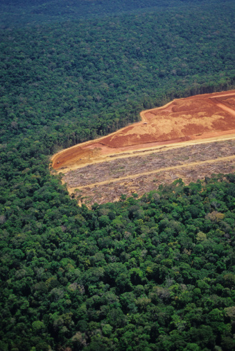 Deforestation「Deforestation in the Amazon」:スマホ壁紙(19)