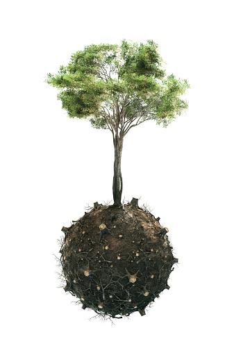 Planting「Deforestation」:スマホ壁紙(2)