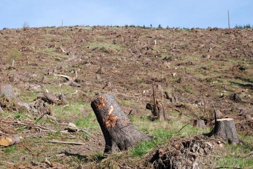 Deforestation「Deforestation」:スマホ壁紙(10)