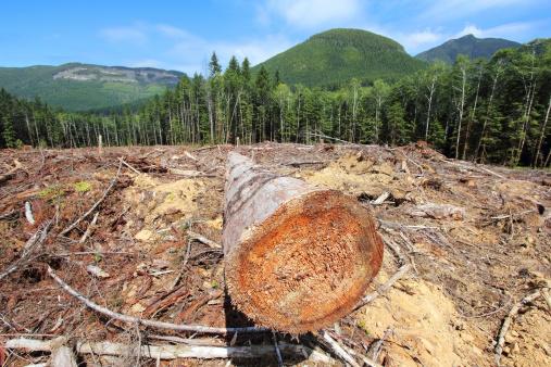 Deforestation「Deforestation」:スマホ壁紙(11)