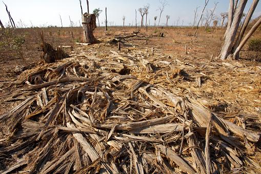 Deforestation「Deforestation」:スマホ壁紙(0)