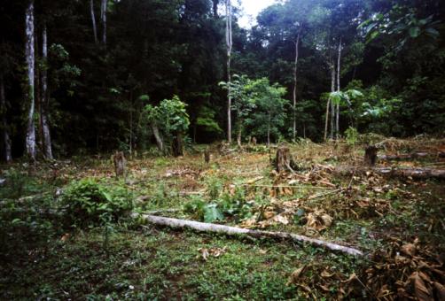 Deforestation「de-forestation tropical rainforest  utria region pacific coast, colombia」:スマホ壁紙(15)