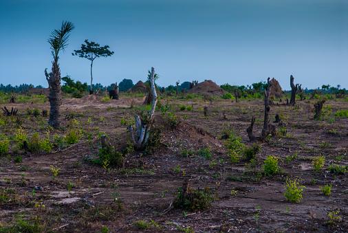 Deforestation「Deforestation」:スマホ壁紙(1)
