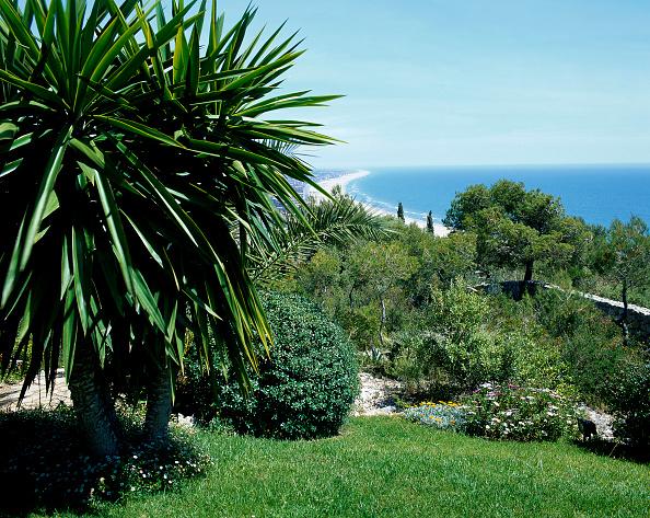葉・植物「View of dense vegetation」:写真・画像(0)[壁紙.com]