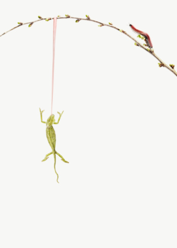 Effort「lizard (chameleon) hanging on a branch with tongue」:スマホ壁紙(5)