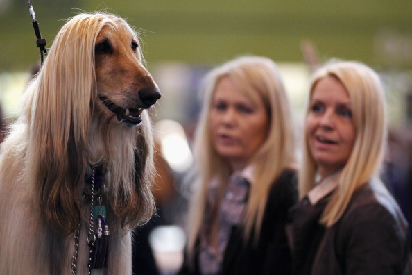 Table「Dogs And Owners Gather For 2012 Crufts Dog Show」:写真・画像(4)[壁紙.com]