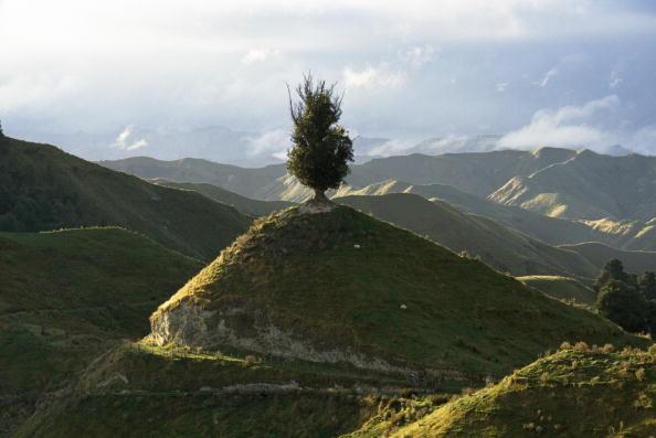 Horizontal「Hilltop Tree」:写真・画像(10)[壁紙.com]