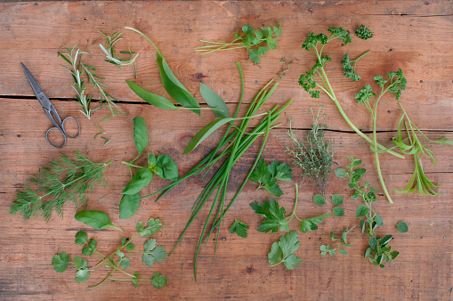 Tarragon「Different culinary herbs and scissors on wood」:スマホ壁紙(9)