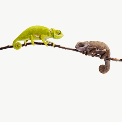 Digital Composite「2 different coloured chameleons looking at each ot」:スマホ壁紙(8)