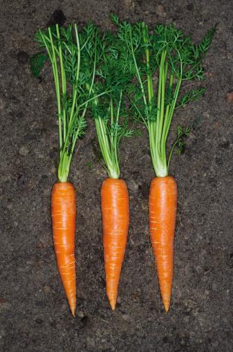 Carrot「Germany, Hesse, Frankfurt, Carrot on soil, close up」:スマホ壁紙(17)