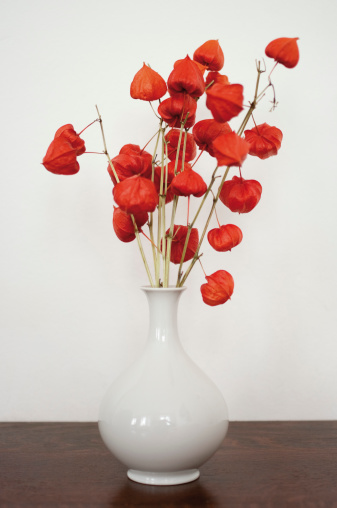 Chinese Lantern「Germany, Hesse, Frankfurt, Bladder cherry flowers in vase on table」:スマホ壁紙(10)