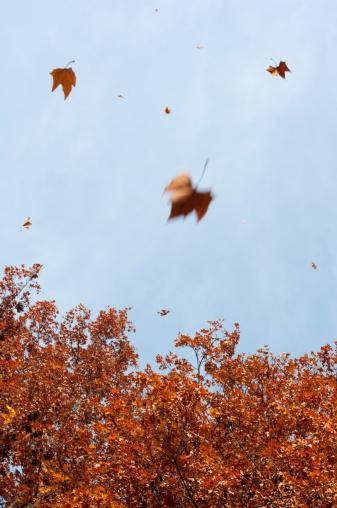 Focus On Background「Germany, Hesse, Frankfurt, Tree and falling leaves」:スマホ壁紙(9)