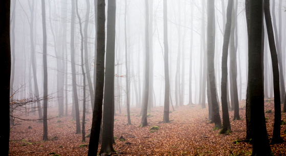 Nature Park「Germany, Hesse, fog in the nature park Taunus」:スマホ壁紙(14)